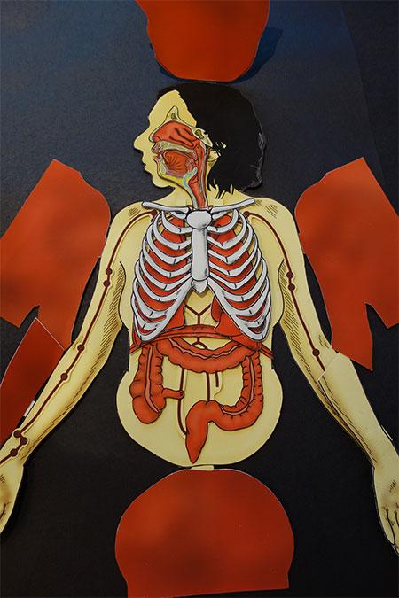 2015 Breath: Anatomical Flap Book