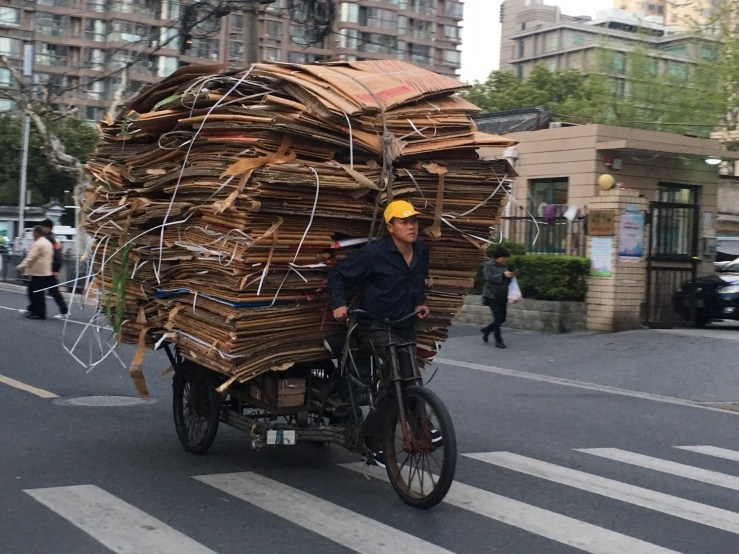 Enormous amounts of cardboard on a bicycle