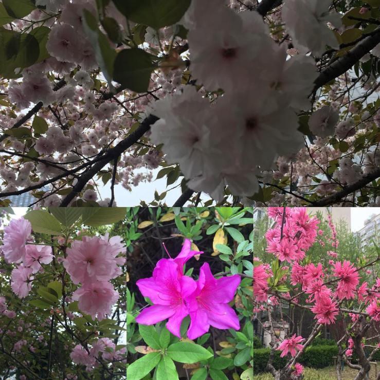 More spring blossoms.