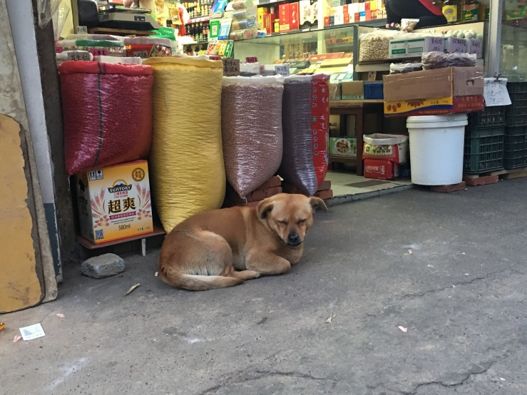 Sleepy Shop Dog