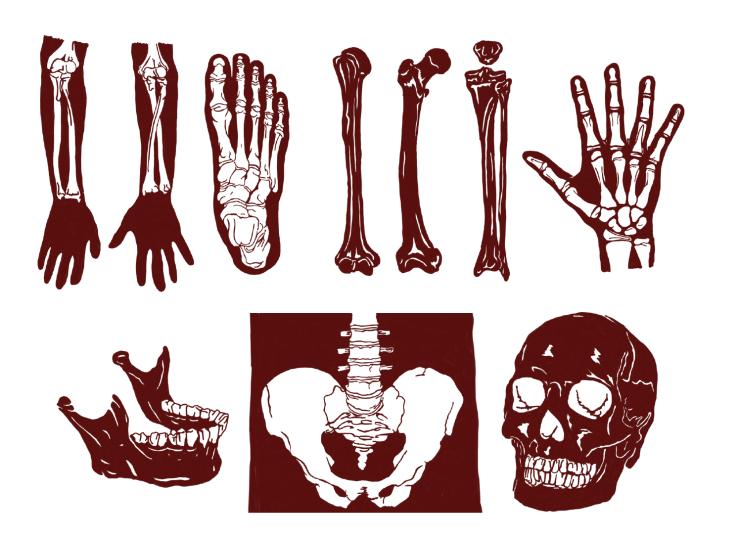 Red Paper Cuts of bones, foot, hand, jaw, pelvis, skull, arm, femur